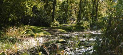 Brook running through woods