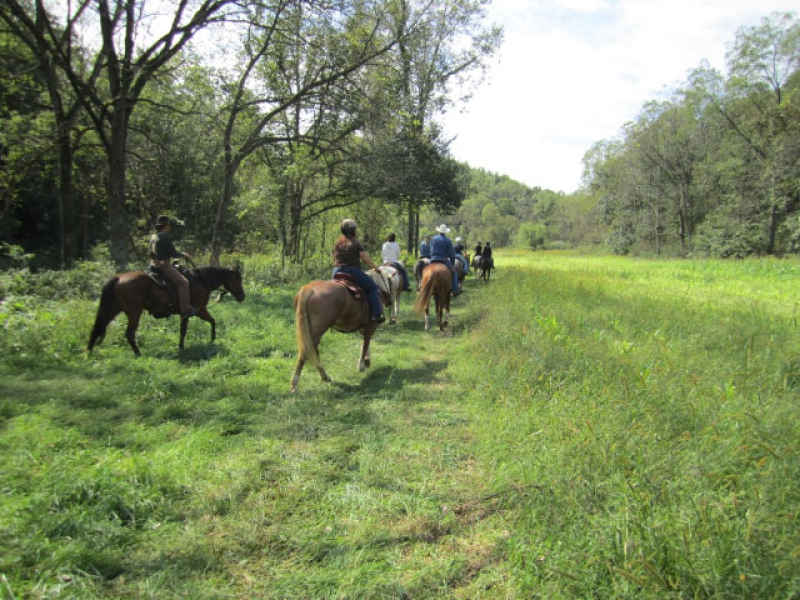 People riding horses on a trail